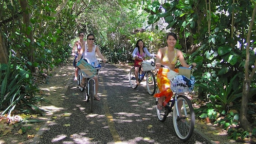 People riding bicycles on shaded path in Oahu