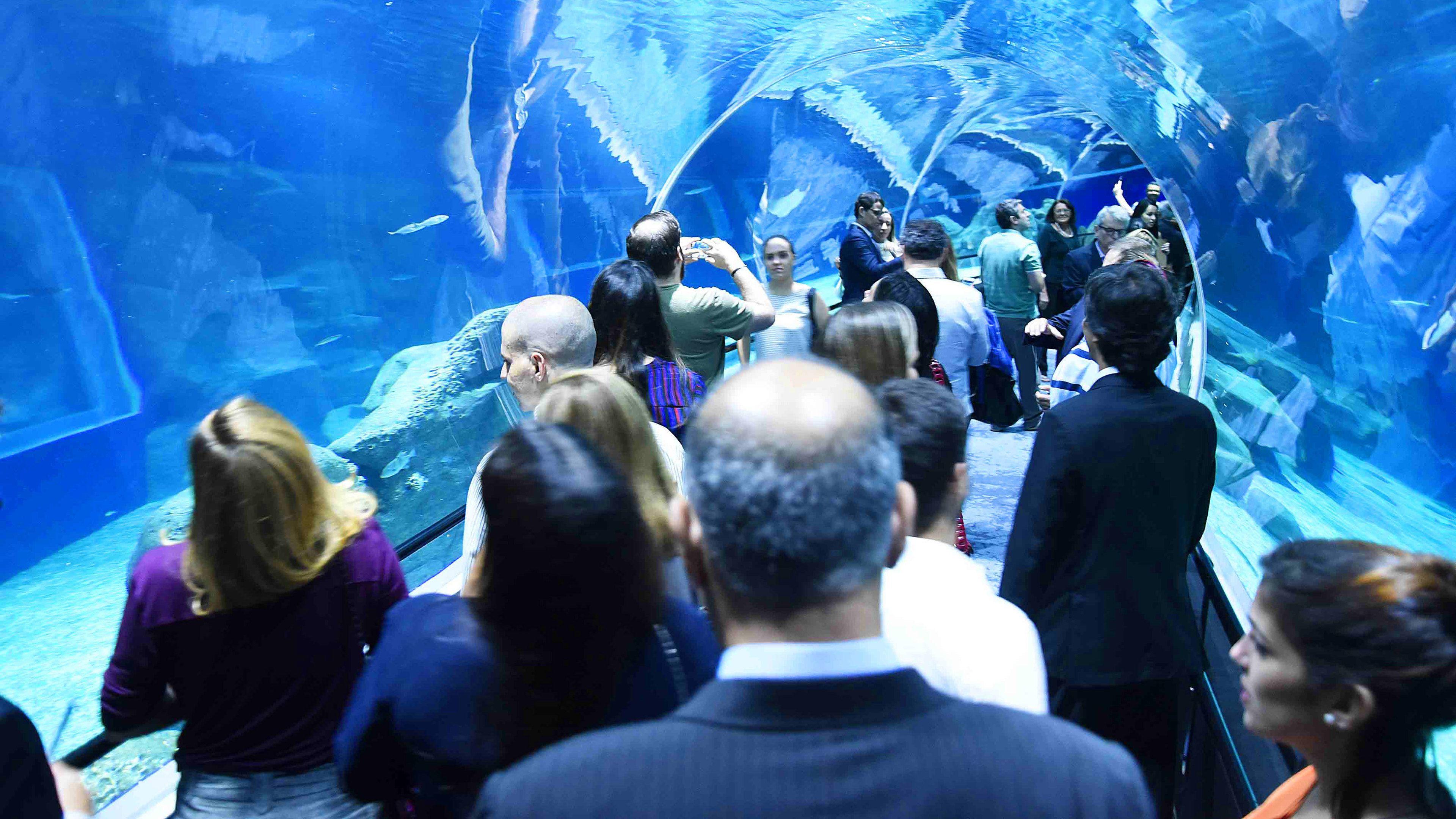 Tour of Aquarium in Rio De Janeiro