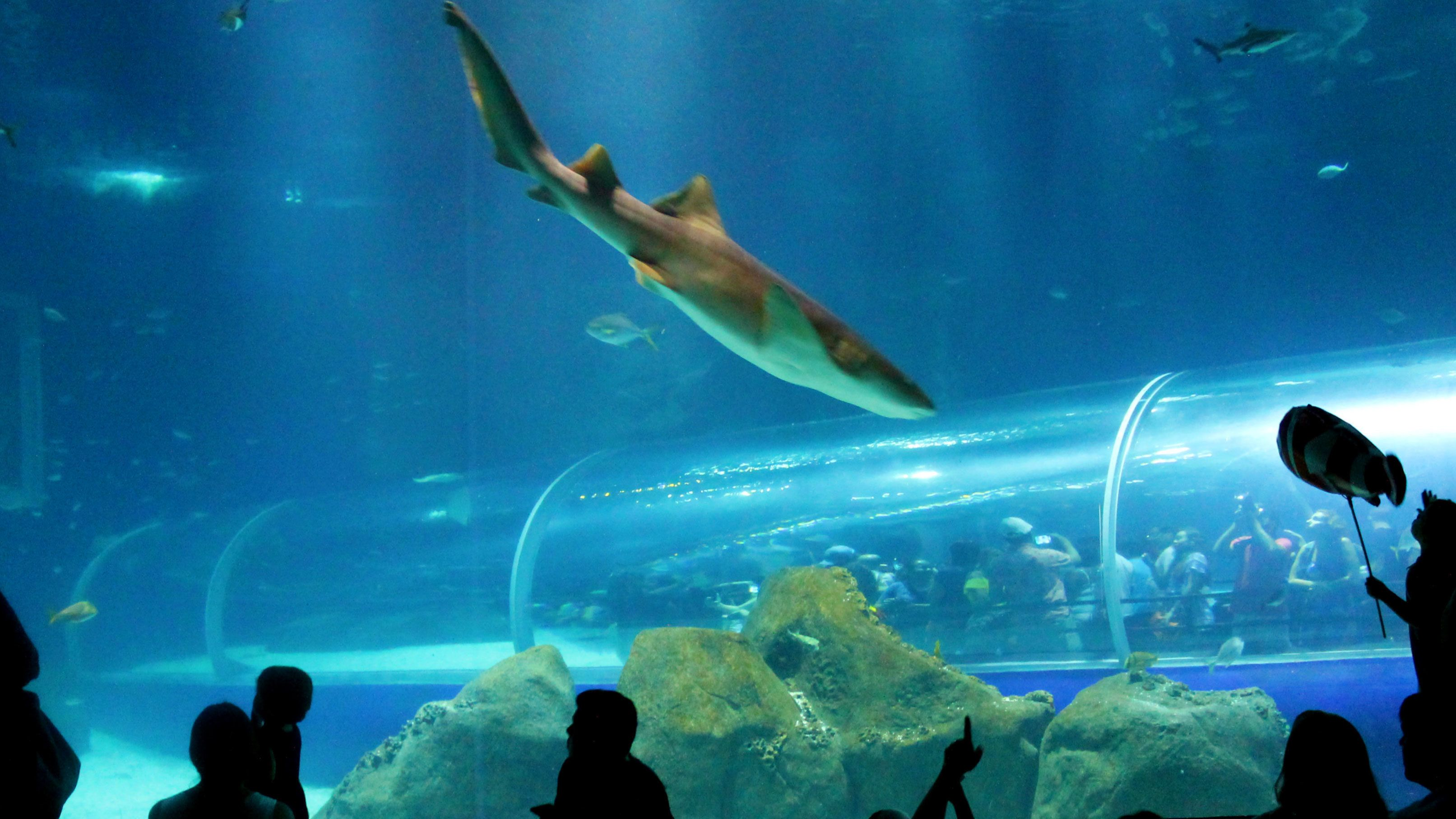 Shark swims by onlookers at a Aquarium