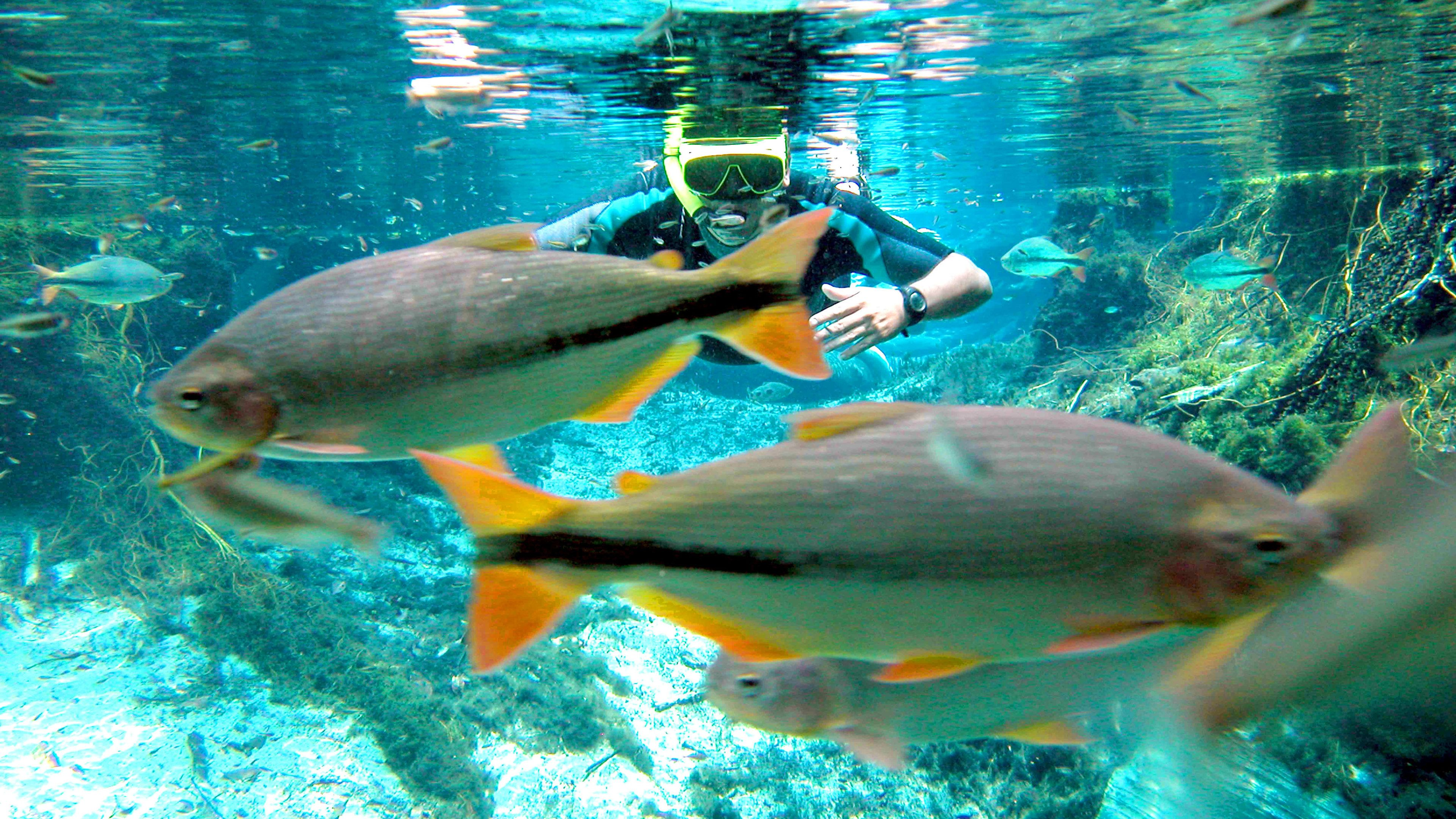 Snorkeler in Aquarium next to fish