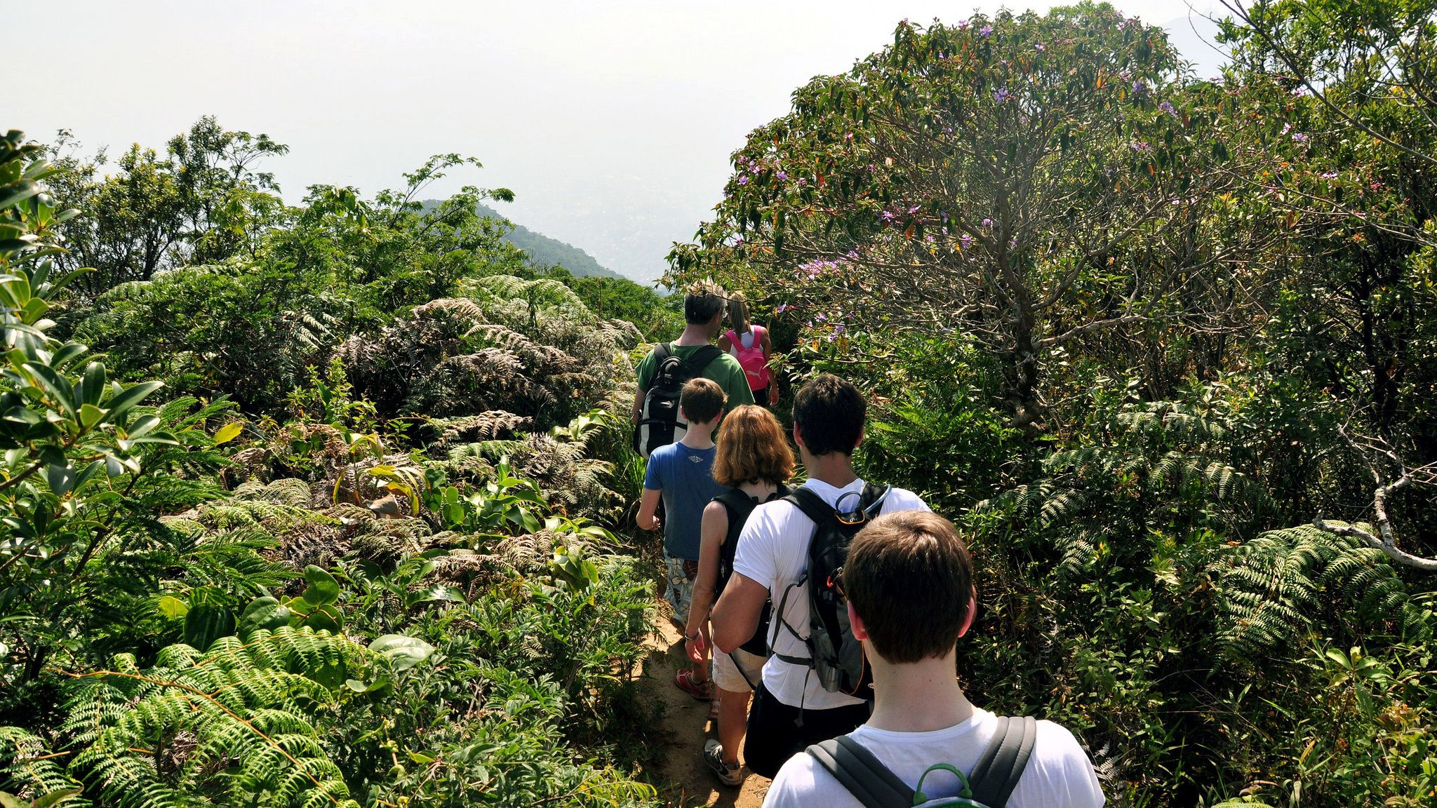 Hiking group on a trail at Tijuca National Park in Rio de Janeiro