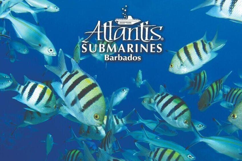 Awesome marine life!