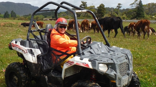Buggy driving on a grass field with livestock in New Zealand
