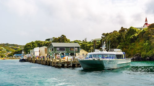 Cruise boat at a dock in Stewart Island, NZ