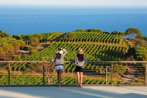Wine tasting and visit to a design Cellar at Ripalte