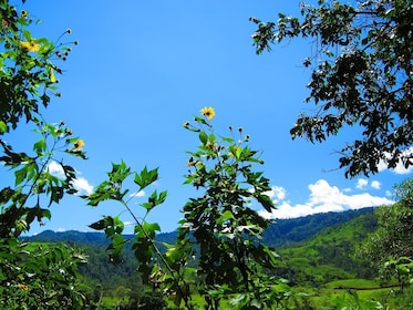 Beautiful yellow flowers and blue clouds at Mindo Cloud Forest