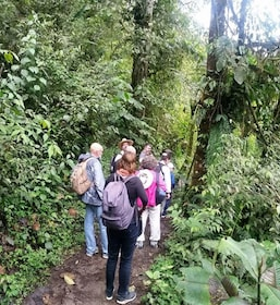 Group walking through the Mindo Cloud Forest