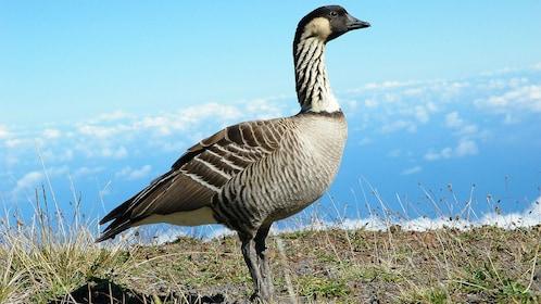 Bird on land in Maui