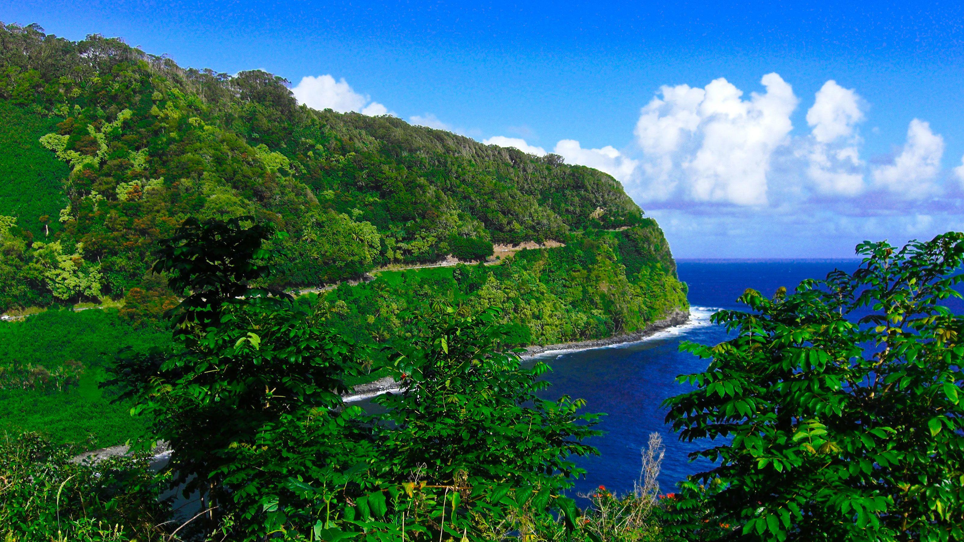 Green landscape near the water in Maui