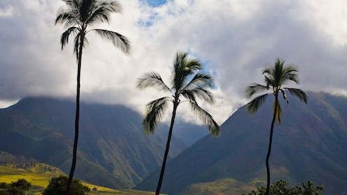 Palm trees and mountain view in Oahu