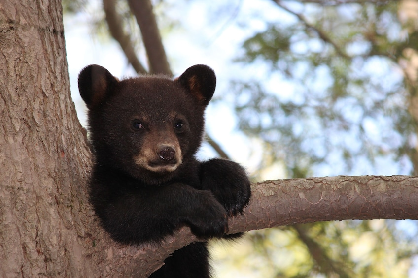 Show item 3 of 10. Grand Teton 4-Hour DUSK Wildlife Safari