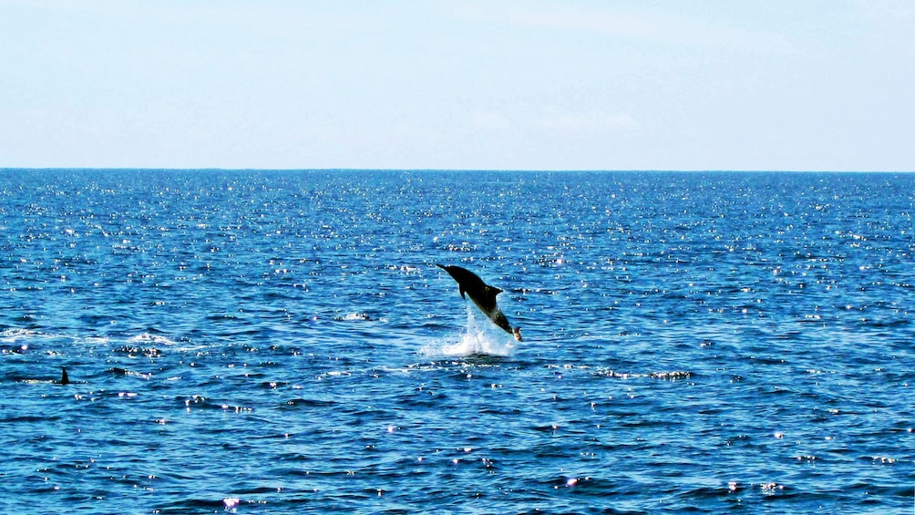 Show item 3 of 8. Dolphin leaping out of the water in Oahu