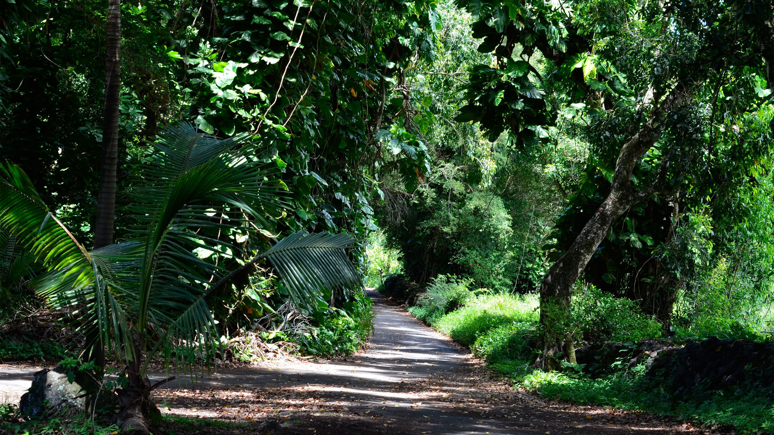 Narrow road through the forest in Hana