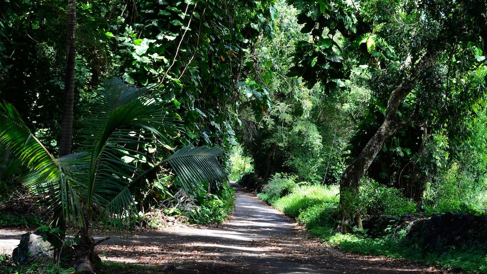 Show item 3 of 10. Narrow road through the forest in Hana