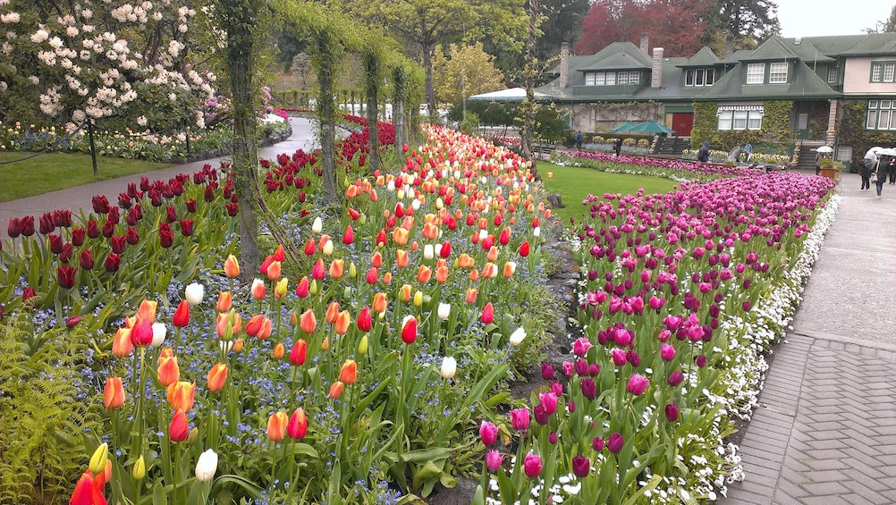 Show item 4 of 5. Tulip garden in Bouchard Gardens.