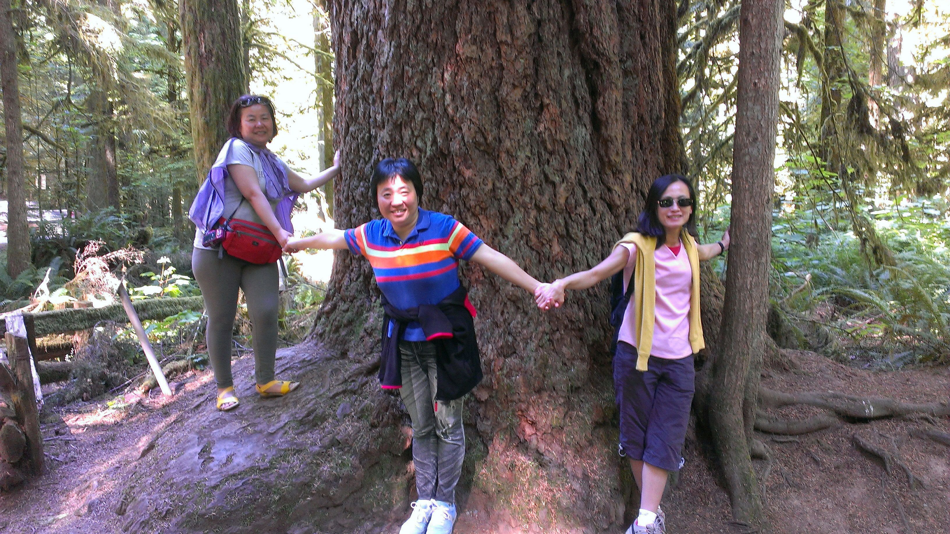 People hold hands around tree at Cathedral Grove Rainforest in Victoria