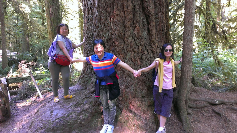 Show item 4 of 4. People hold hands around tree at Cathedral Grove Rainforest in Victoria