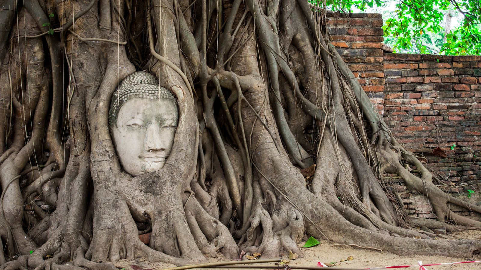 head sculpture of Buddha partially engulfed by tree roots in Bangkok