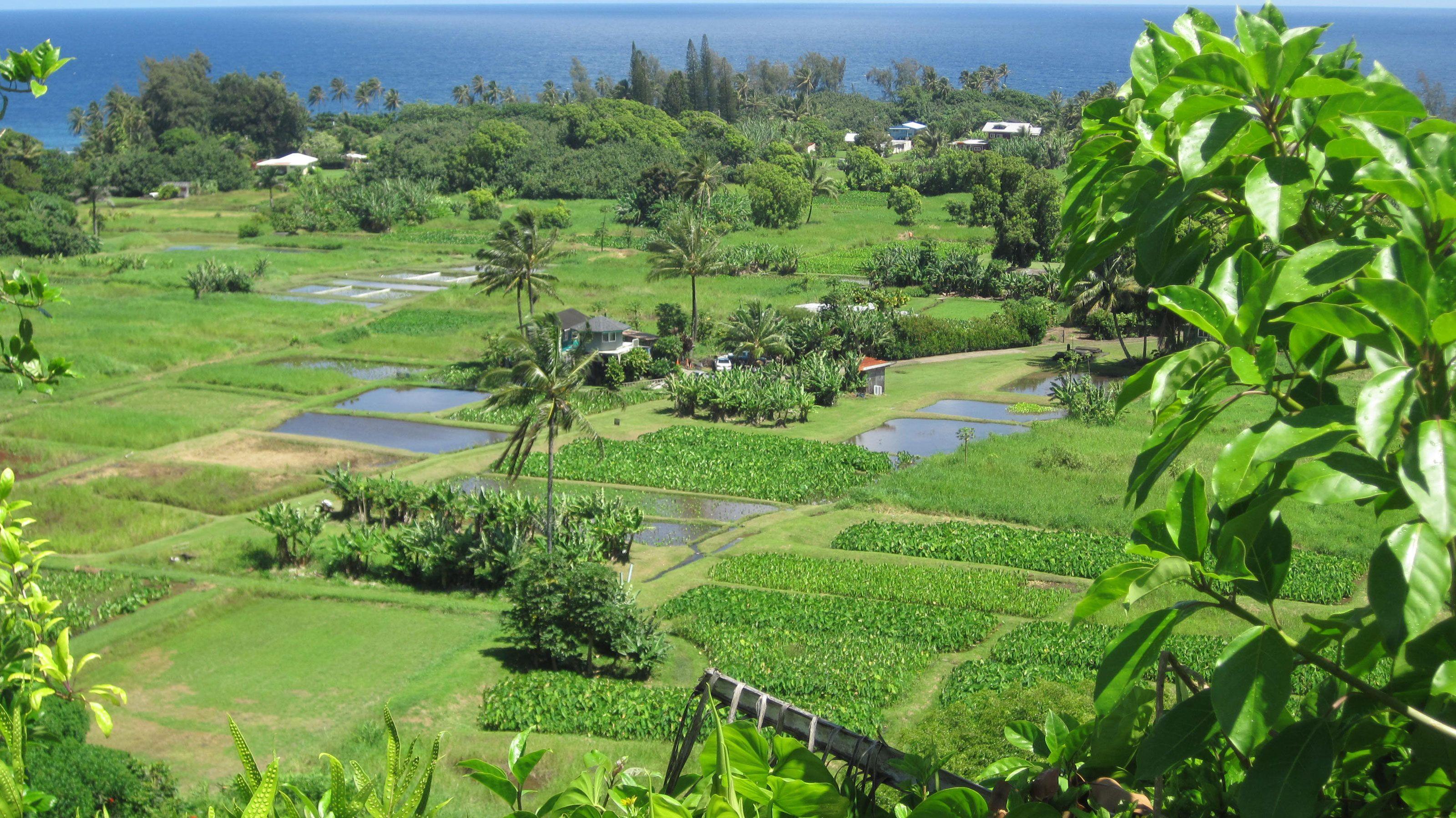 Landscape of farm fields in Maui