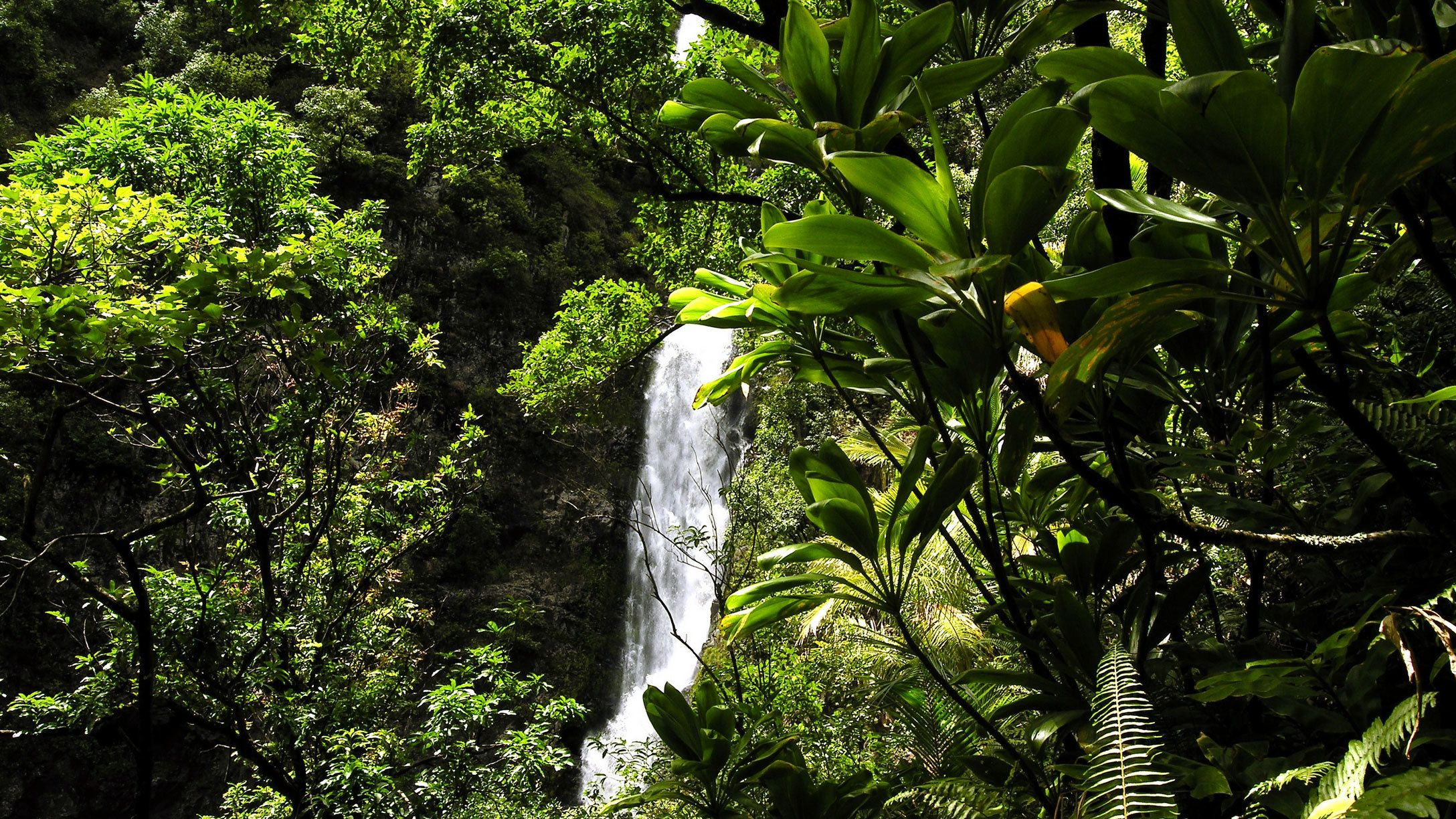 Waterfall in Hana rainforest in Maui