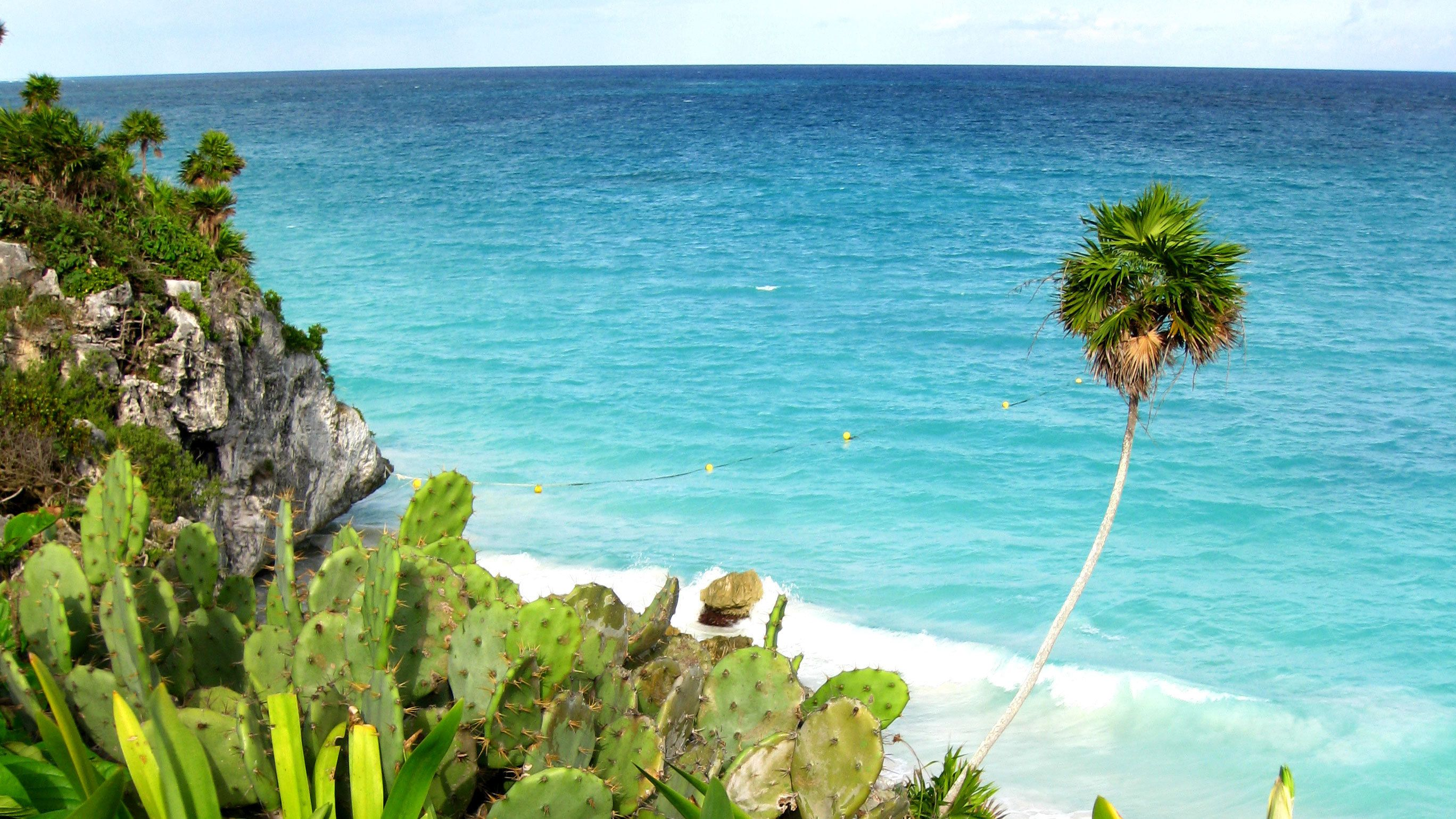 Plants and palm trees line the coast in Mexico