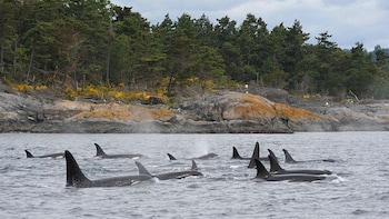 Whale & Wildlife Watching Tour