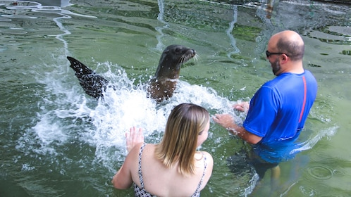 Couple in the water with sea lion splashing them.