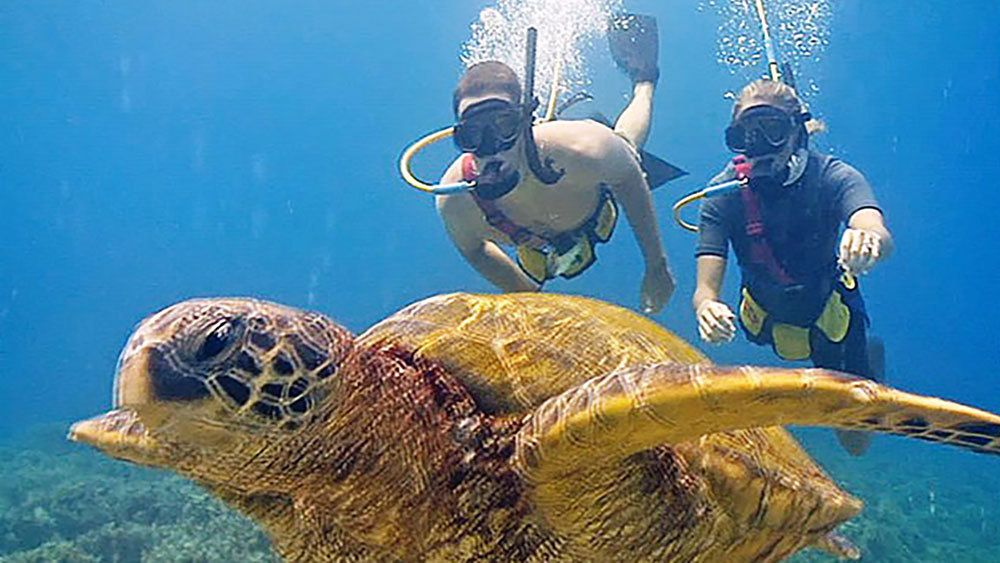 Two snorkelers swimming towards a sea turtle in Maui