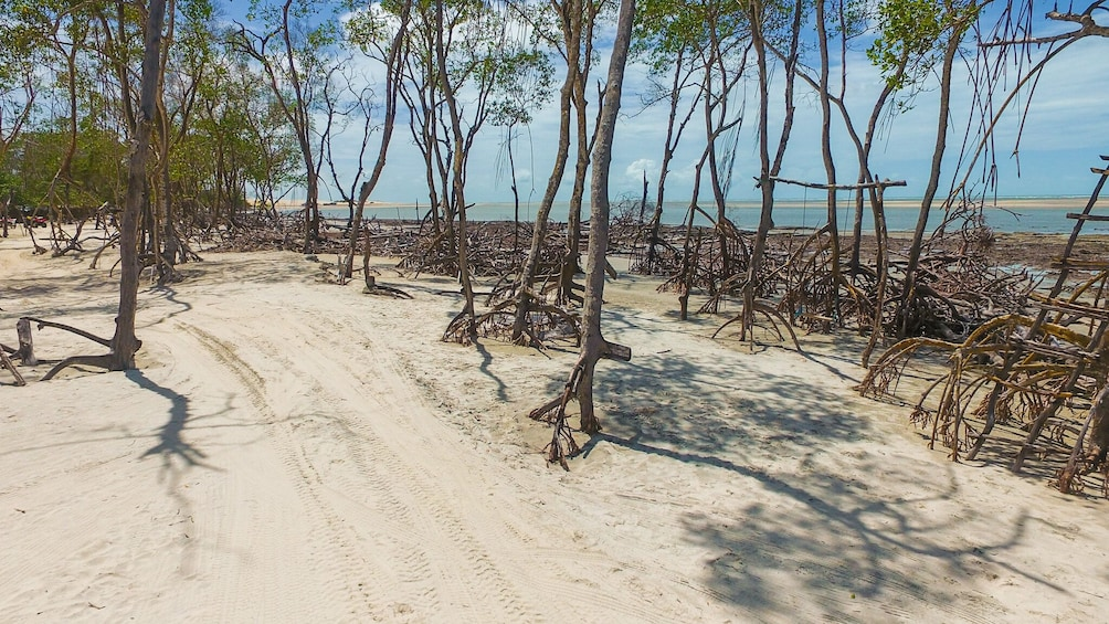 Private Buggy Tour To Lagoa Do Paraíso