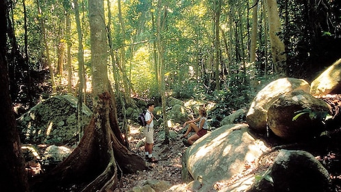 hikers taking a break in the woods in Australia