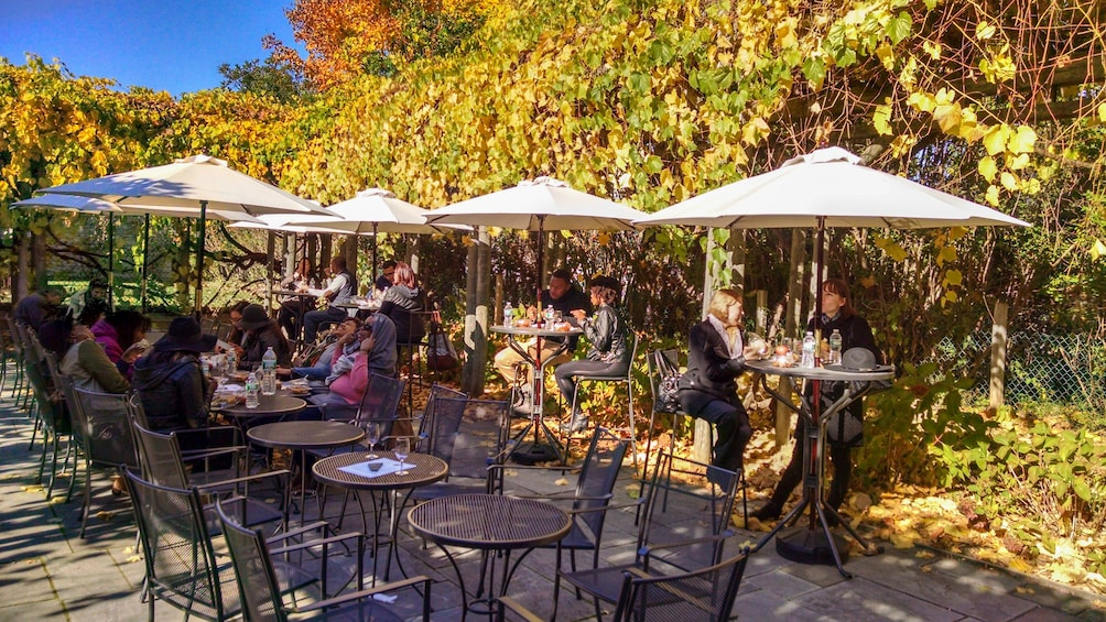 Show item 2 of 5. Outdoor patio surrounded by several trees with visitors lounging and enjoying food and wine.