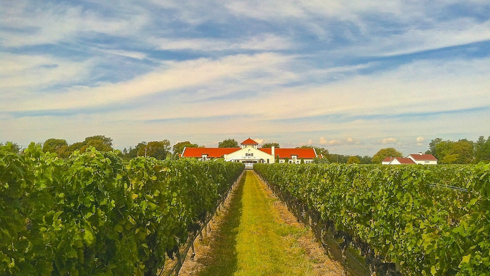 Show item 3 of 5. Landscape view of vineyard with estate building seen in the distance.