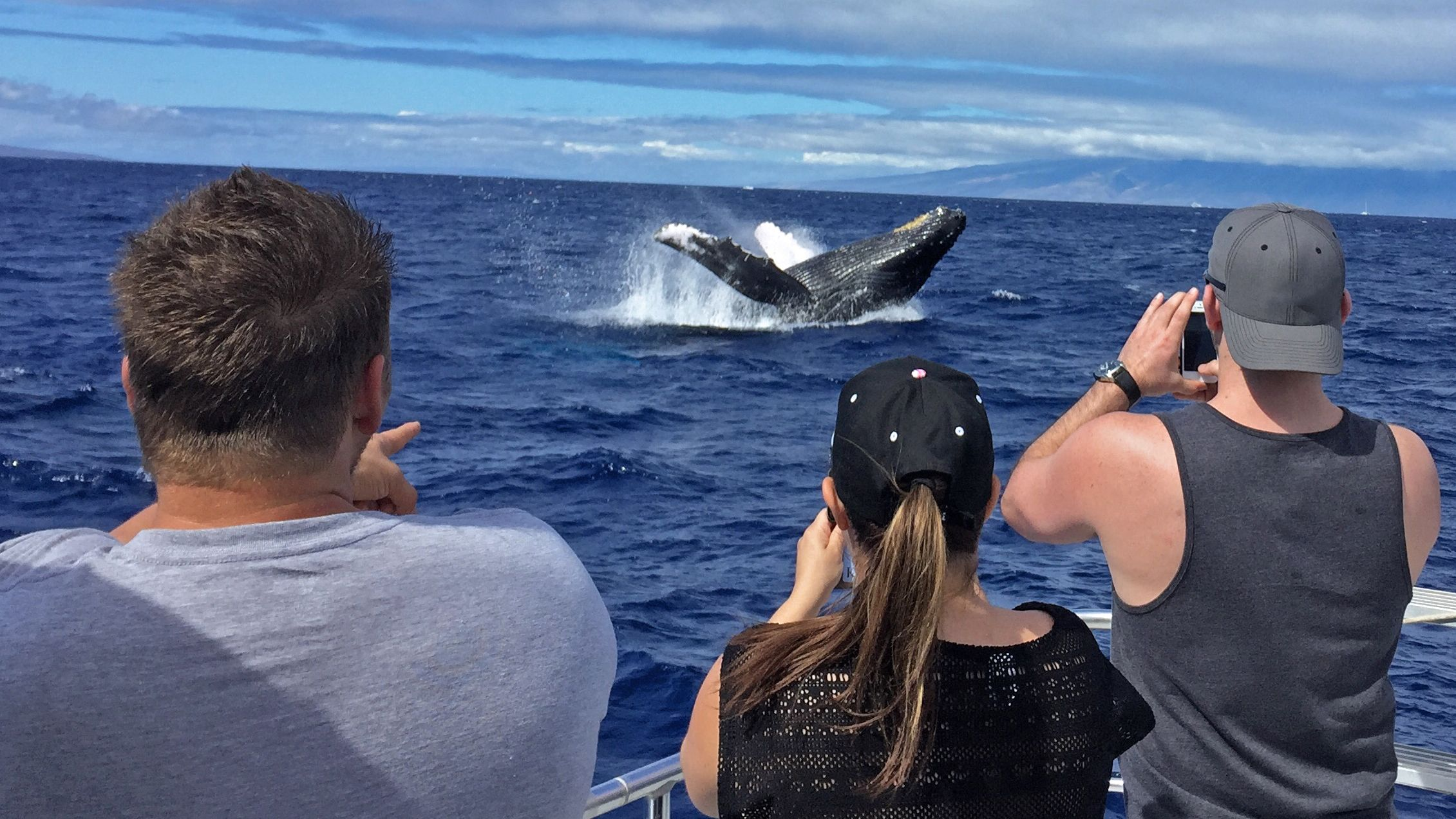 Group observing whale