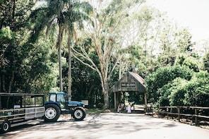 Tropical Fruit World Farm Full Tour