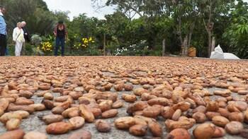 Churute Mangroves & Cocoa Hacienda with Lunch