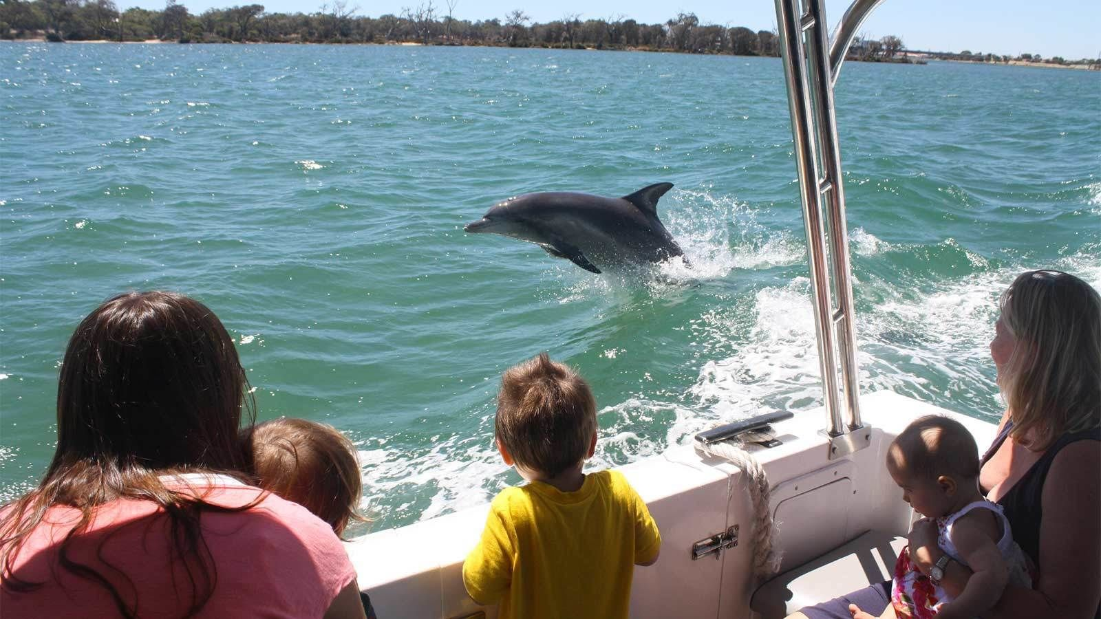 View from onboard a cruise boat looking at the dolphins in Perth, Australia
