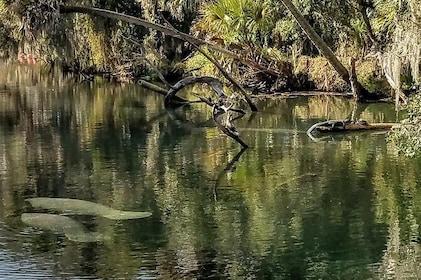 Florida Wildlife Guided Kayak Tour - Blue Spring State Park, Orange City, FL