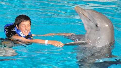 Boy swimming with a dolphin at the dolphin encounter in Panama City, Florida