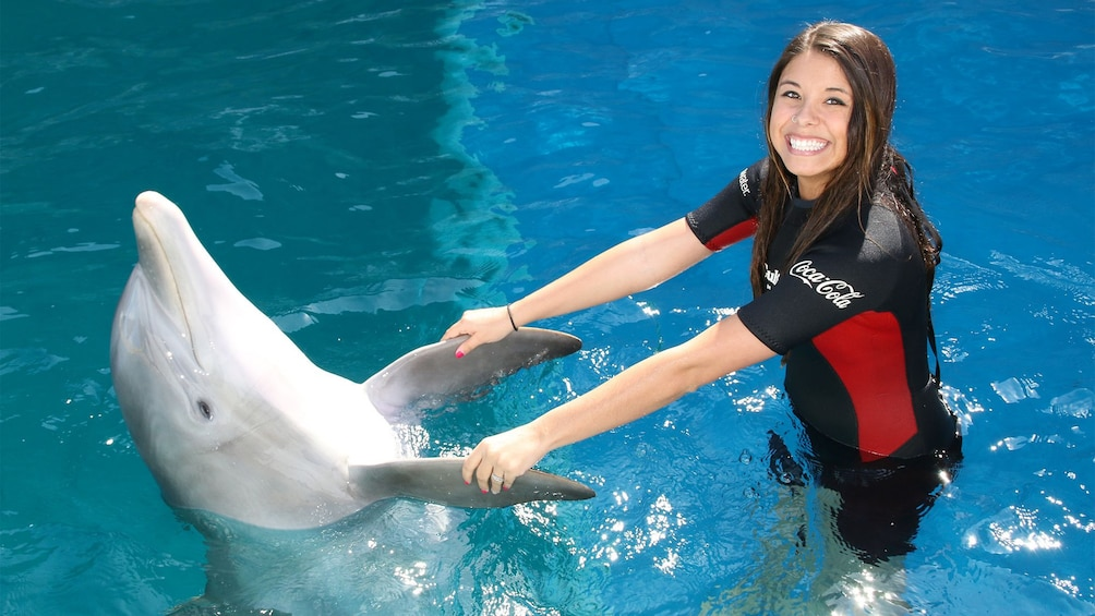 Fort Walton Beach Destin Dolphin