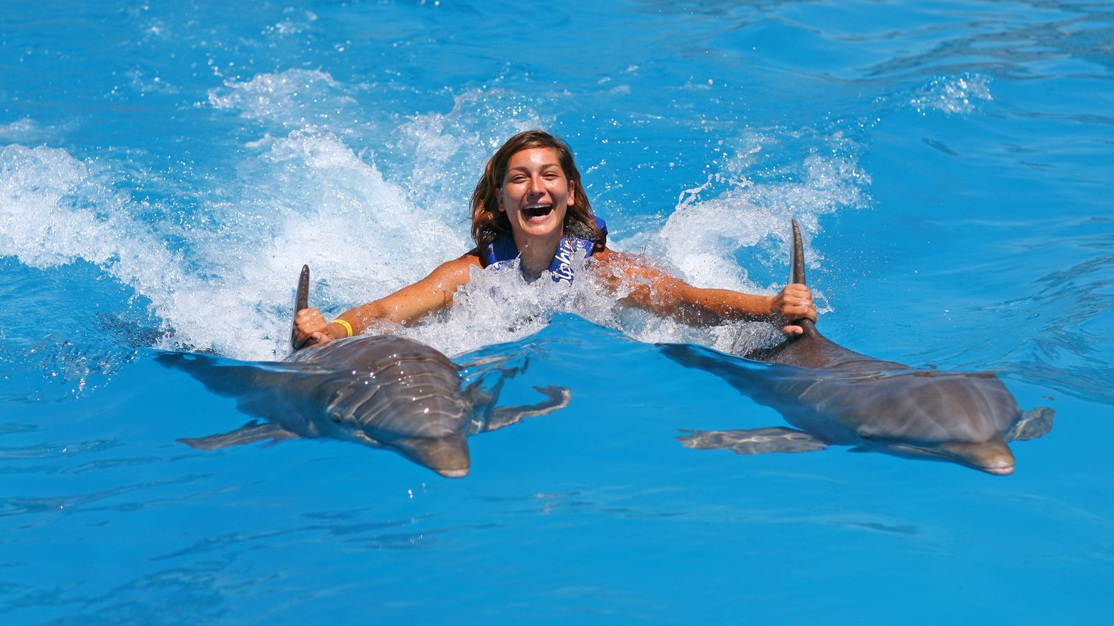 woman getting carried across the pool by dolphins in Panama City