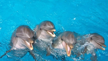 Dolphin Meet N Greet + Admission to Gulf World Marine Park