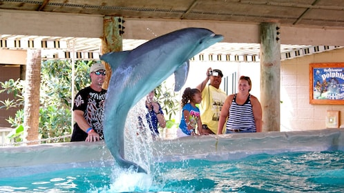 Dolphin jumping from water at dolphin meet and greet in Panama City, Florida