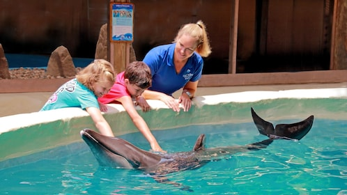kids petting a dolphin by the pool in Panama City