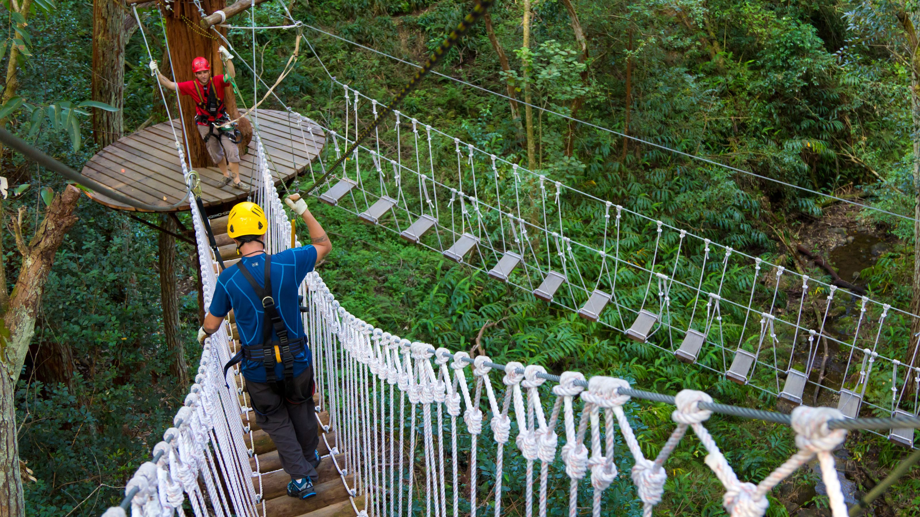 Two people walking across a bridge suspended above the trees in Hawaii