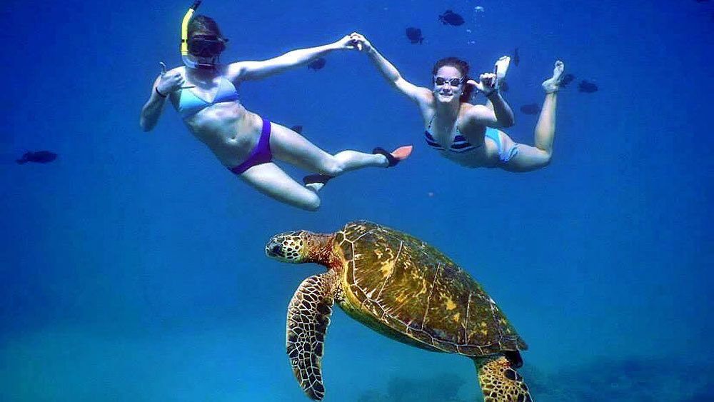 women swimming with a sea turtle in Maui