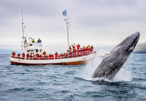 Classic Whale Watching Tour from Dalvik