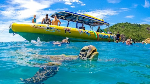 A sea turtle coming up for air next to snorkelers and an Ocean Ride boat.