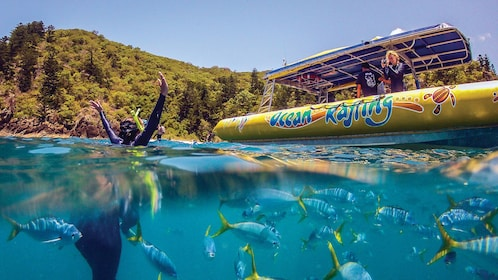 View of happy snorkler in the water with several fishes and yellow raft nearby.