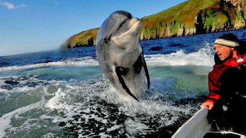 Dolphin jumping out of the water next to a man in a boat in Ireland