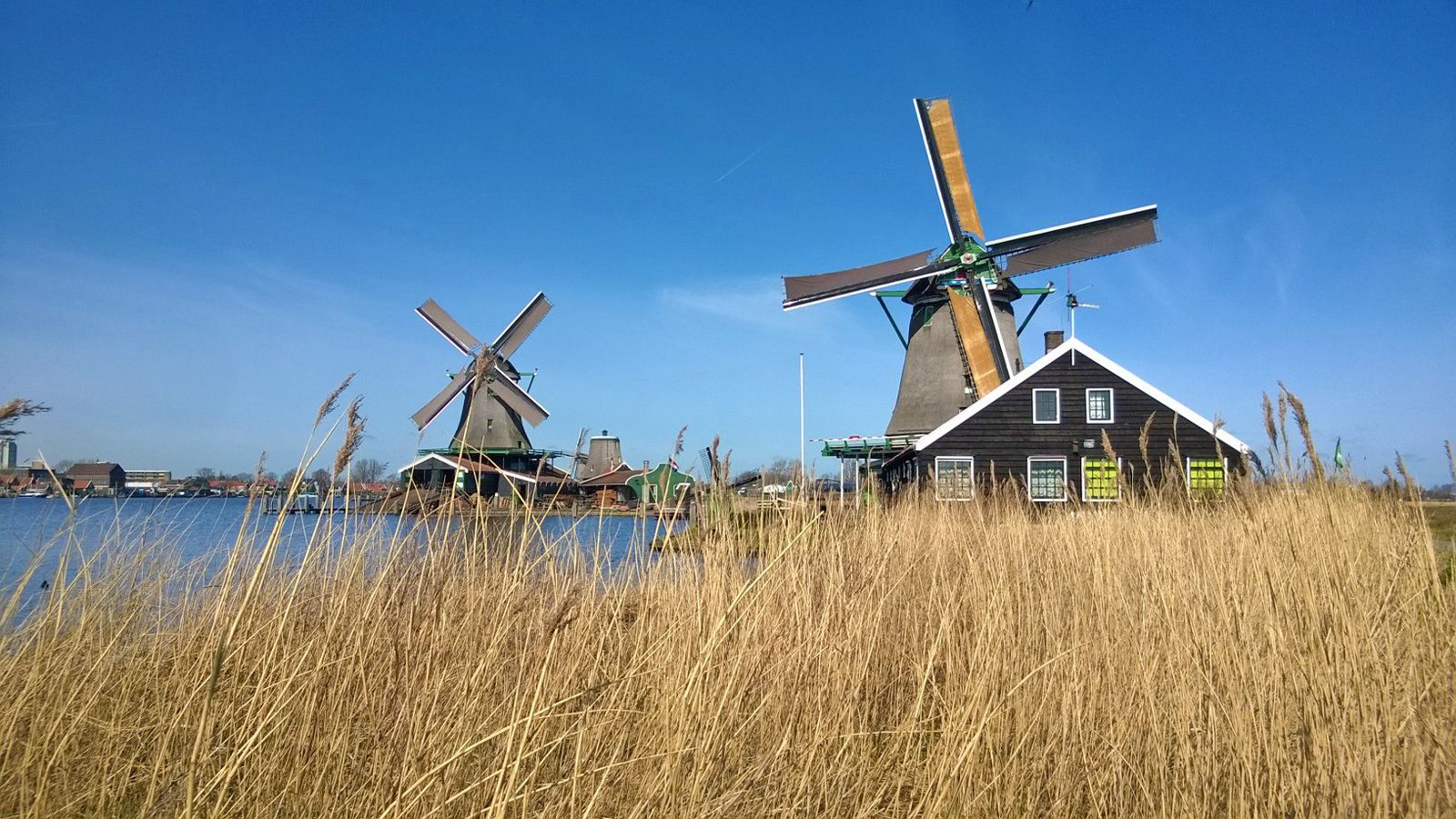 view of the windmills from tall dry grass in Amsterdam
